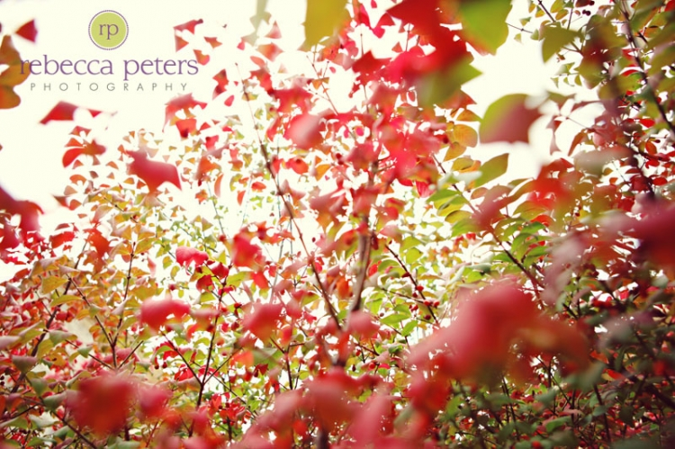 rpeters_fall2009_0001